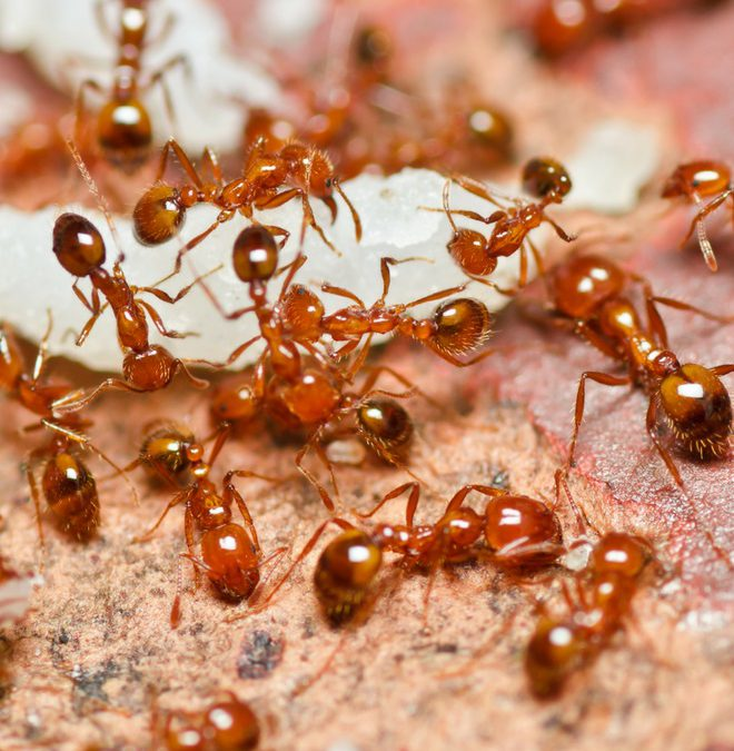 Inexpensive, Natural Ant Remedies