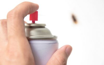 7 Tips For Your Home Not To Turn Into a Colony of Bugs or Ants